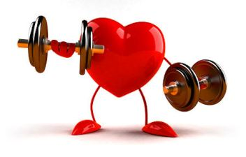 hjertemuskel